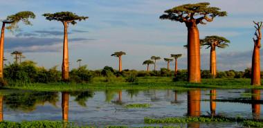 The Living Eden: Madagascar's Unique Flora and Fauna