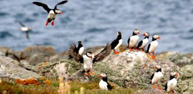 Natural Landscapes & Gardens of the Channel Islands: Jersey, Guernsey, Herm, Burhou & Sark