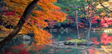 Autumn & the Art of the Japanese Garden
