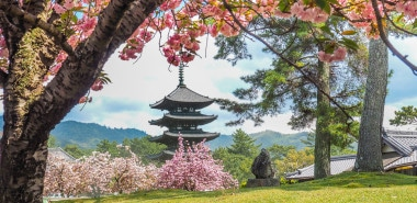 Cherry Blossom and the Art of the Japanese Garden