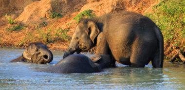 A Sri Lankan Odyssey: Elephants, Temples, Spices & Forts